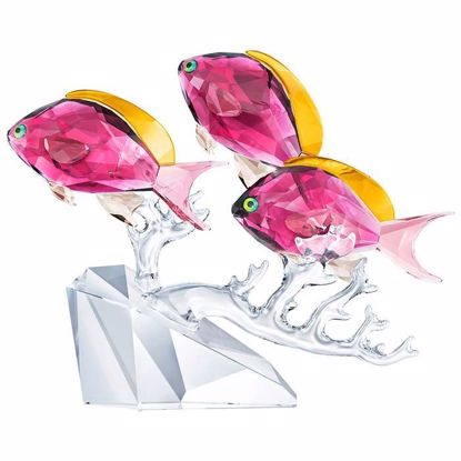 Swarovski figurer. Anthias Fish Trio - 5428652